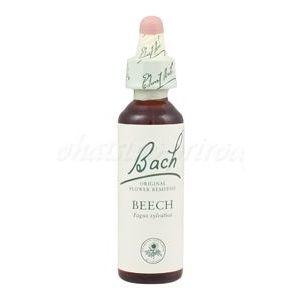 Beech - Buk lesný - bachove kvapky vyobraziť